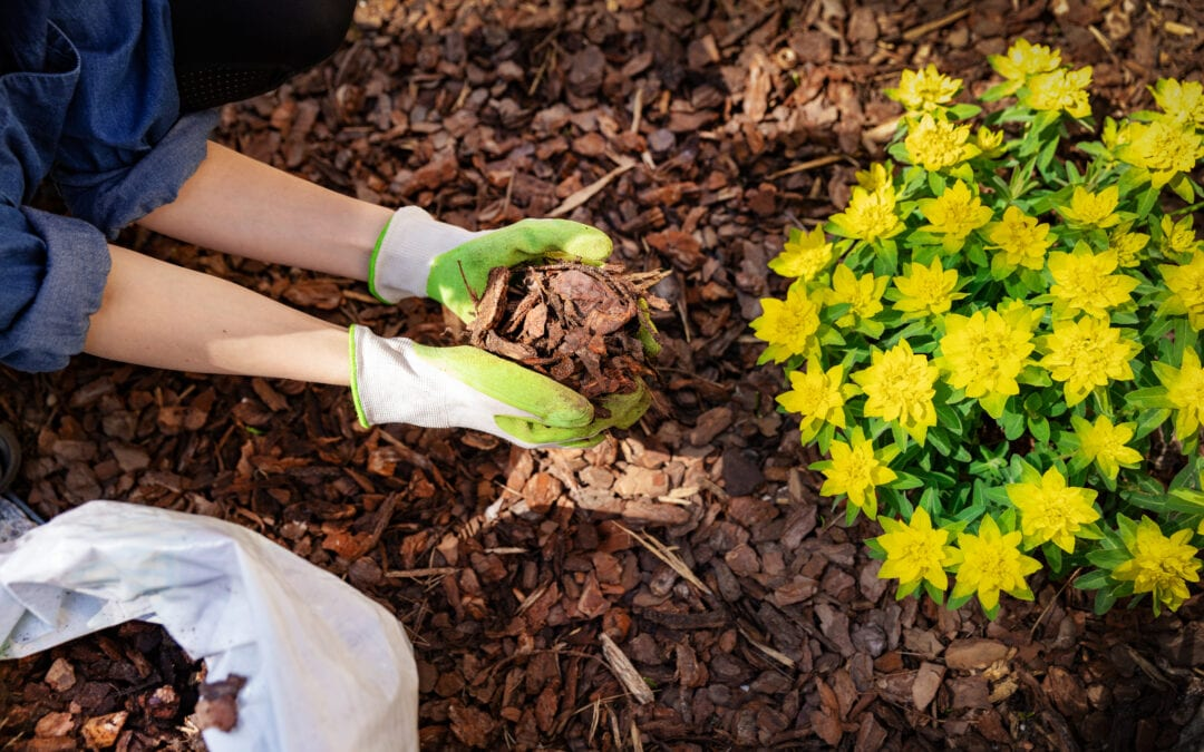 Spring Landscaping: Seasonal Planting Tips for Homeowners